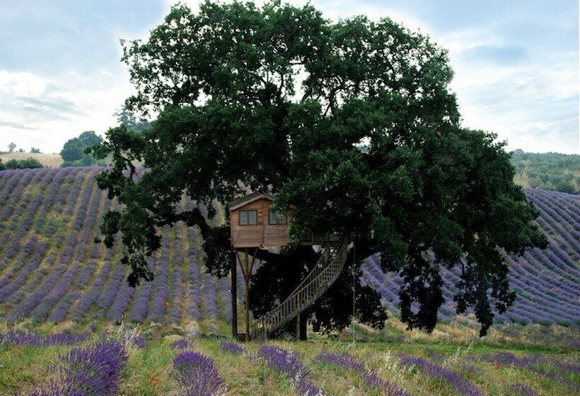 Lavender Treehouse - La Cabane Perchee - Italy - Exterior - Humble Homes